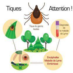 Prévention Maladie De Lyme